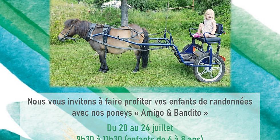 Balade à poneys - du 20 au 24 juillet