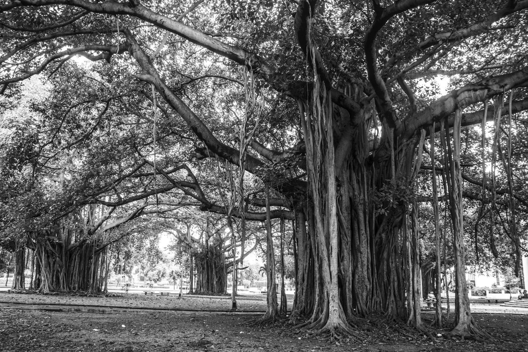 Árvores e raízes