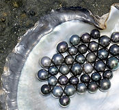 Flat lay view of Tahitian Black Pearls i