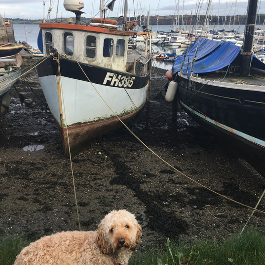 Falmouth River Watersports Cockerpoo boats dogs Mylor Yacht Harbour