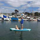 Dogs on Paddleboards, SUP, Paddleboard, Jobe SUP, Falmouth River Watersports