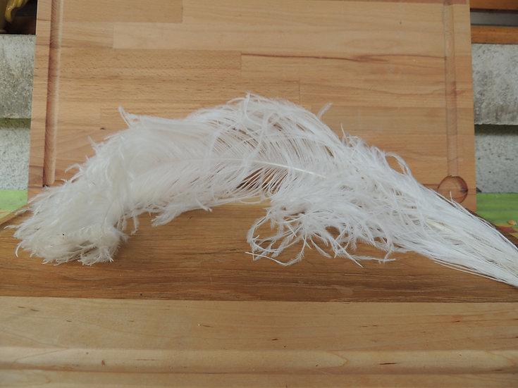 Plume d'autruche naturelle blanche 55cm