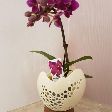 Oeuf d'autruche décrotaif vase