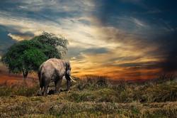 elephant-2729413__340