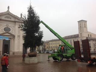 Nuova vita per l'albero di Natale di piazza Maggiolini, ora è stato affidato alla natura!