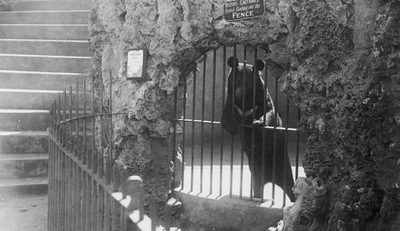 Perth Zoo - History