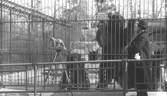 Bronx Zoo - History