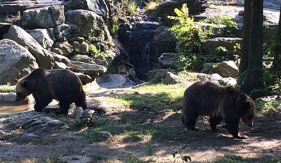 Bronx Zoo - Updates