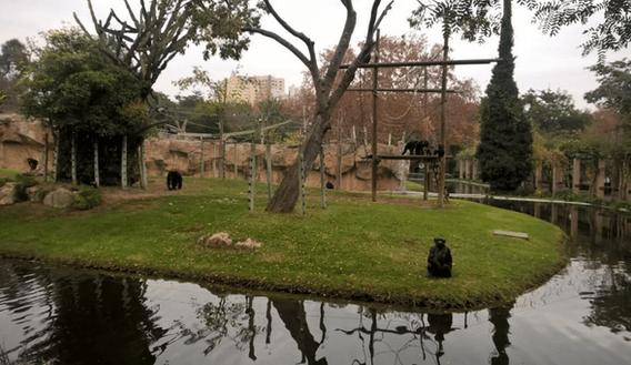 Lisbon Zoo - Updates