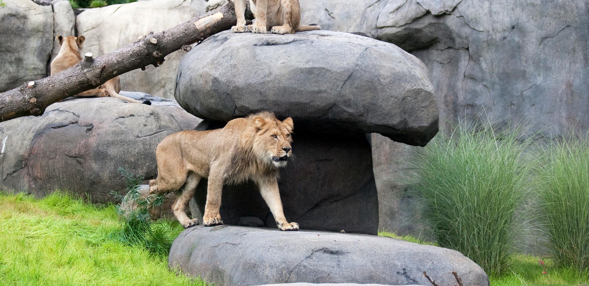 Oregon Zoo - Updates.