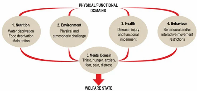 Five Domains of Animal Welfare.webp