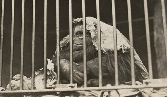 Melbourne Zoo - History
