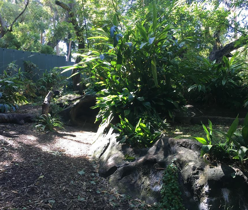 Current sun bear enclosure