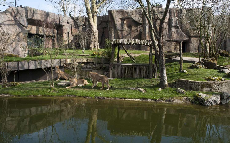 ZSL London Zoo - Updates