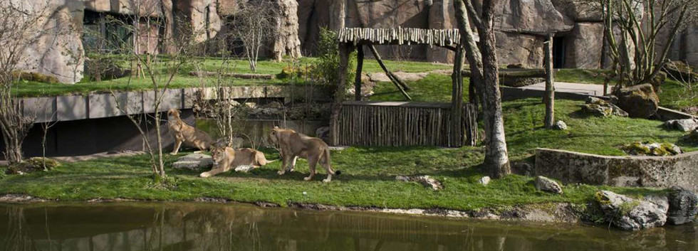 ZSL London Zoo - Updates