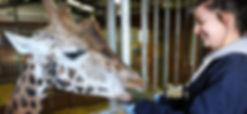 Animal_Management_Zoo_780_360_s_c1.jpg