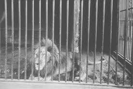 Oregon Zoo - History