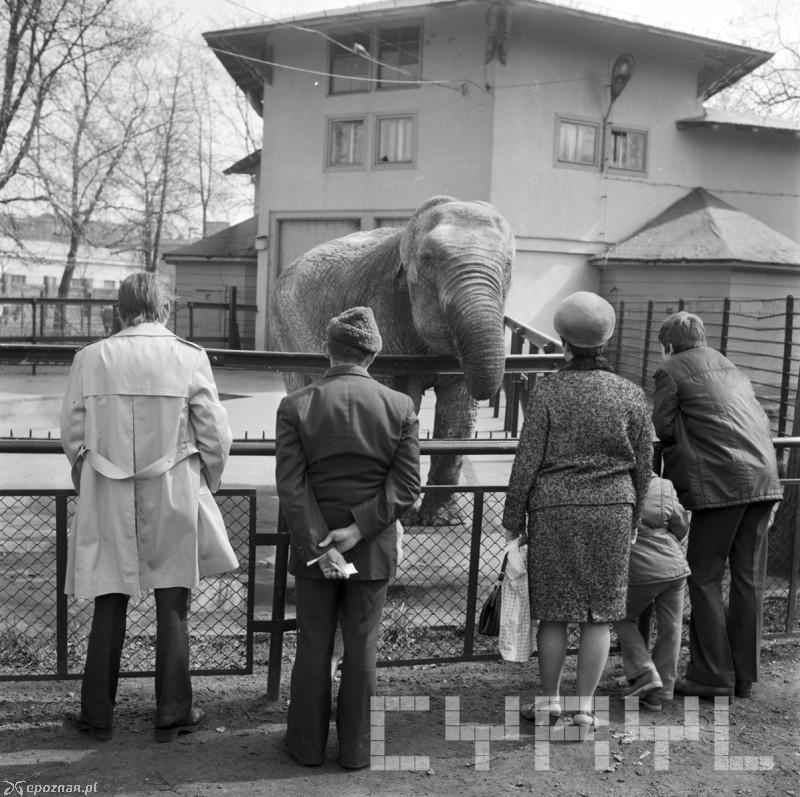 Poznan Zoo - History