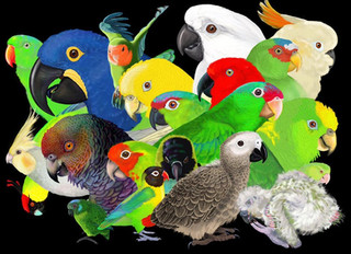 """""""World Parrot Day"""" Special: Parrot Science at the Zoo"""