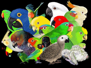 """World Parrot Day"" Special: Parrot Science at the Zoo"