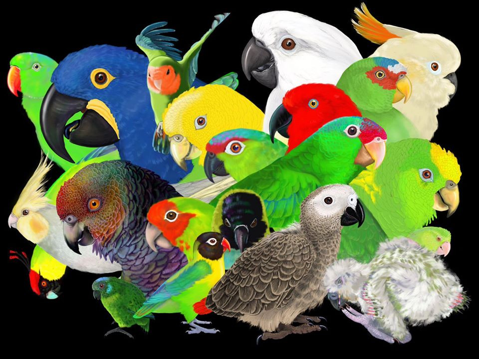 World Parrot Day. Image by Parrot TAG.