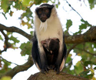 Rolloway monkey_YWP_OCT2020.jpg