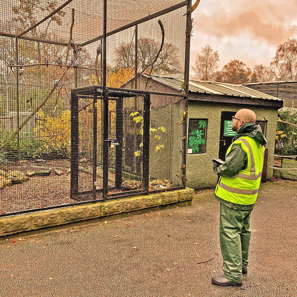 Ricardo collecting baseline behavioural data on the African grey parrots at Drayton Manor Park & Zoo, November 2019.