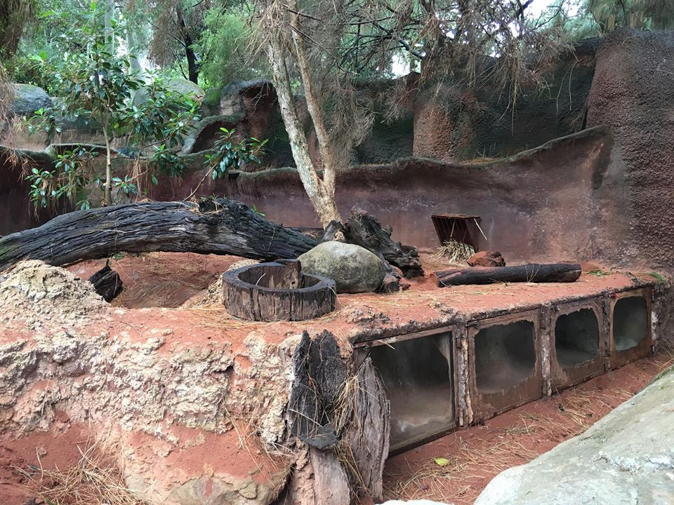 Southern hairy-nosed wombat enclosure at Perth Zoo, which recreates the burrow systems they use in the wild, with windows to allow the visitors to see the animals underground. Photo credit: Ricardo Lemos de Figueiredo.