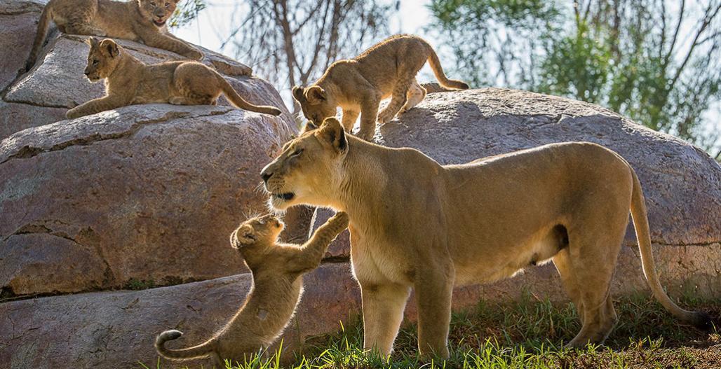 San Diego Zoo Safari Park - Updates