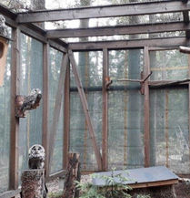 ural owl reintroduction.jpg