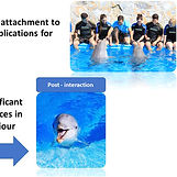 Visitor interactions with dolphins_Zoo Biology 2021.jpg