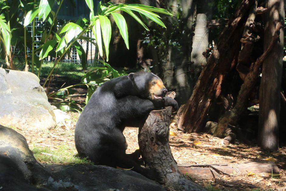 Perth Zoo - Updates