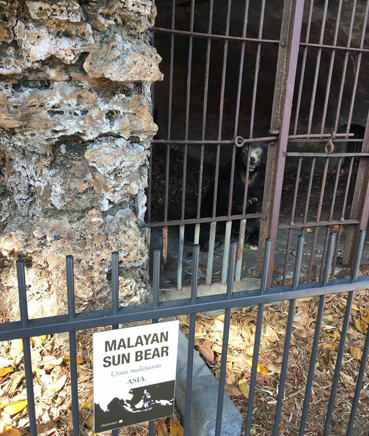 Old sun bear enclosure