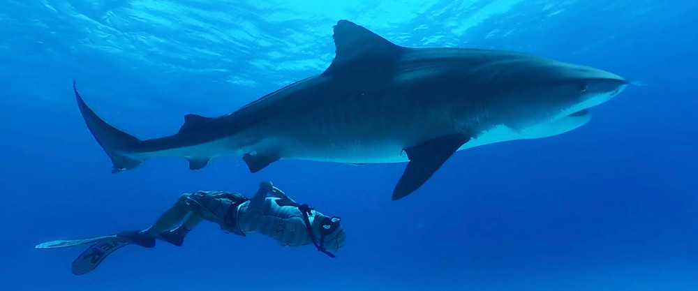 Shark Dive is part of the Blue Ocean series to aquaria, zoos and science centres around the world.