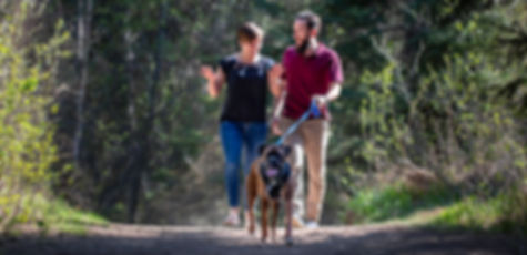happy couple walking their dog at family and pet photo session