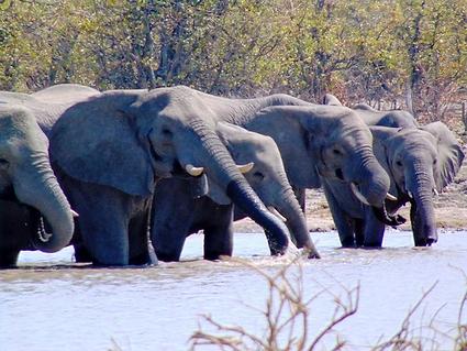 Book Botswana 4X4 Adventure Tours