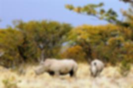 Book Namibia 4X4 Adventure Tours