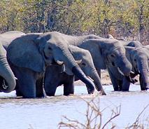 Botswana 4X4 Safaris
