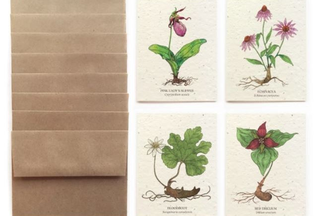 At-Risk Flowers Greeting Cards Set Of 8 Plantable Seed Paper