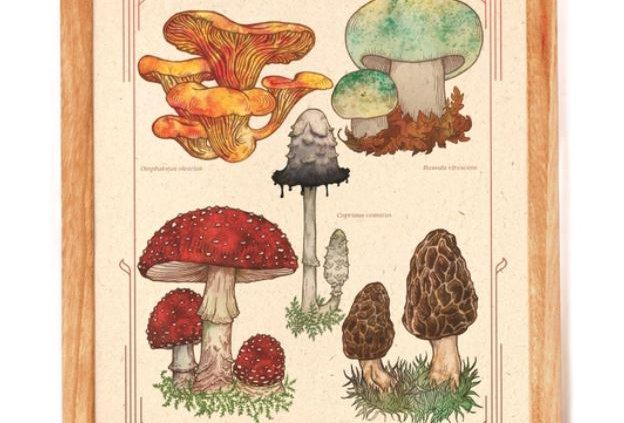 Wild Mushrooms Print