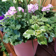 12in Geranium Combo Planter.jpg