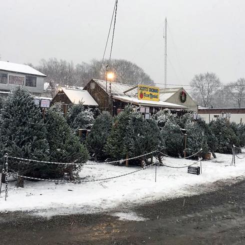 Christmas at Scotts.png