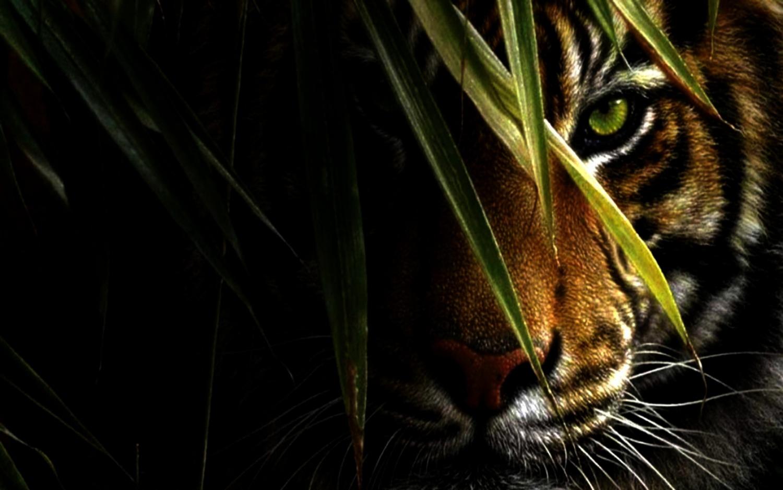 tiger-eye-ibackgroundz-hd-wallpaper-29456.jpg 2014-3-27-20:32:56