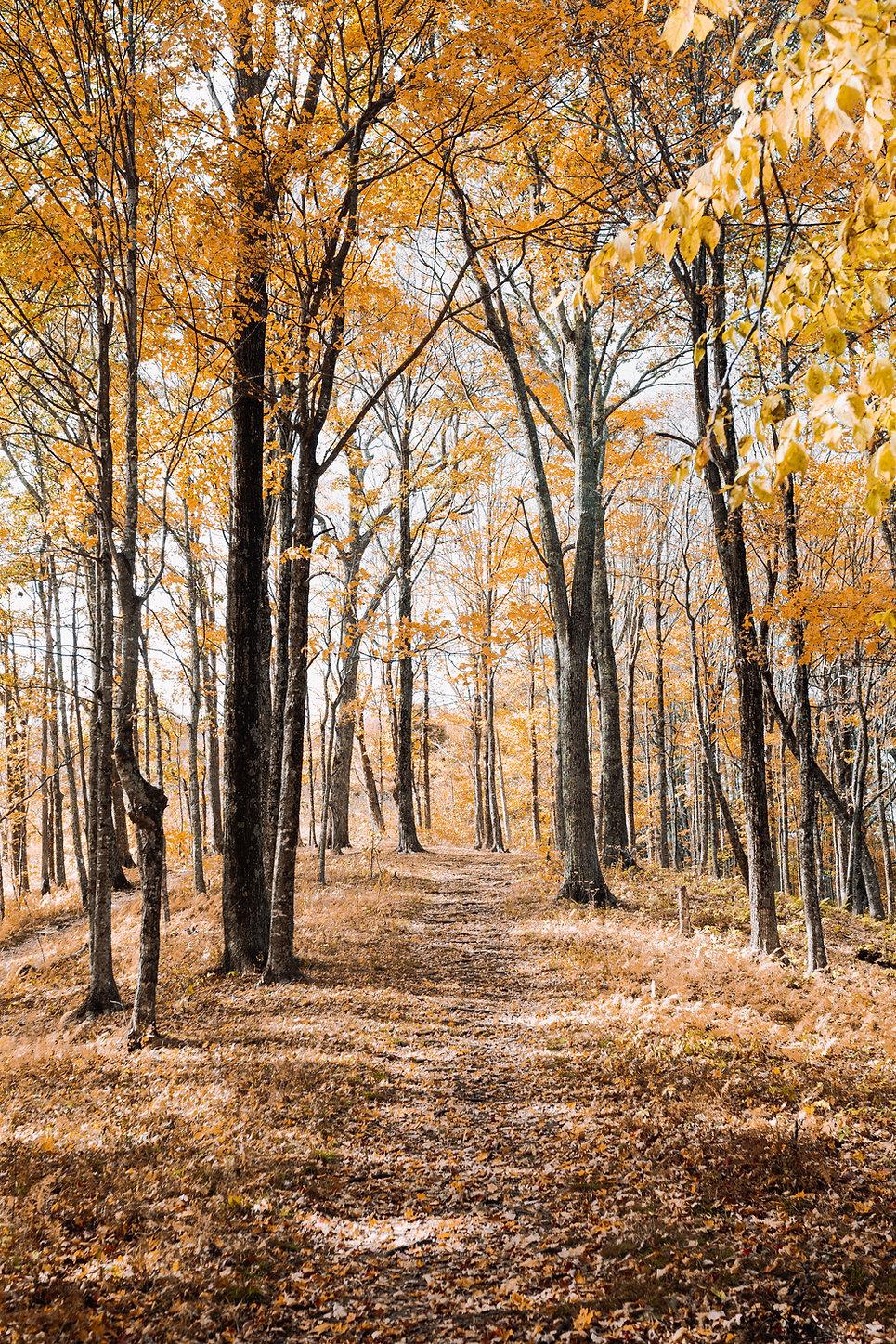 forest_background.jpg