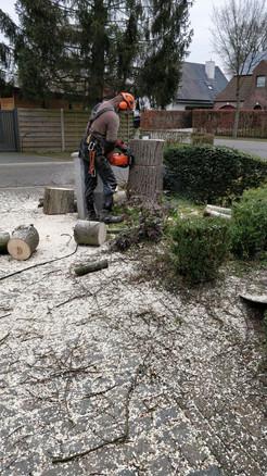 Vellen van een boom