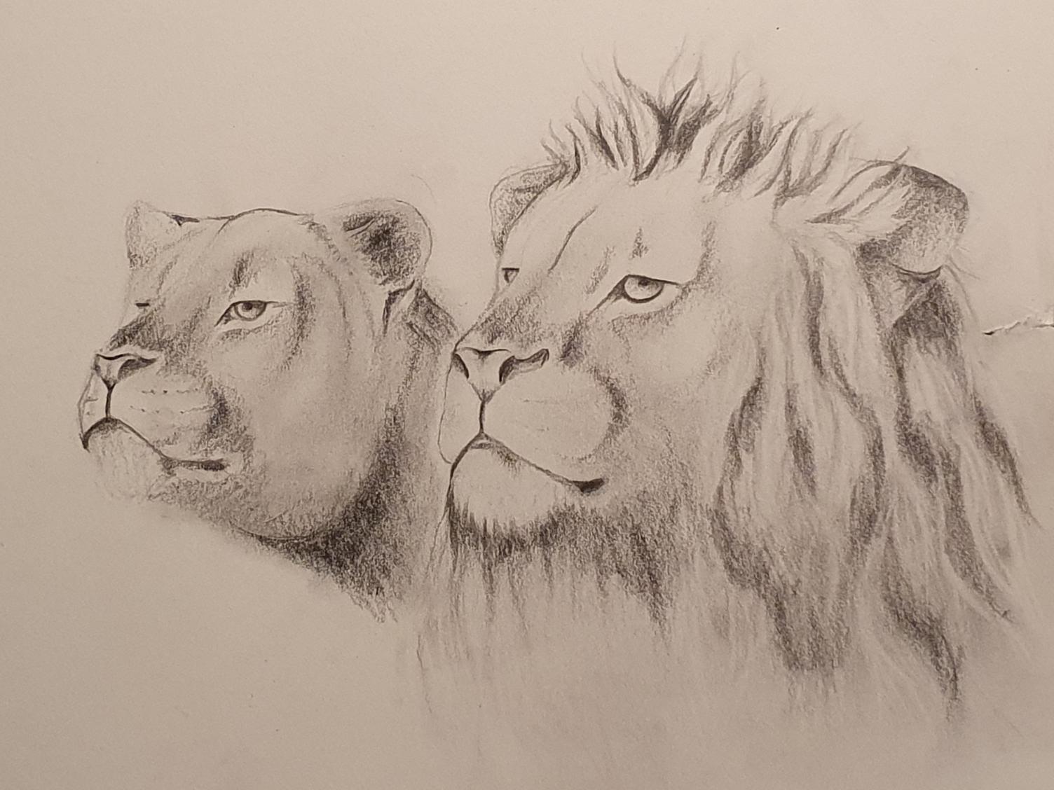Löwen Studie