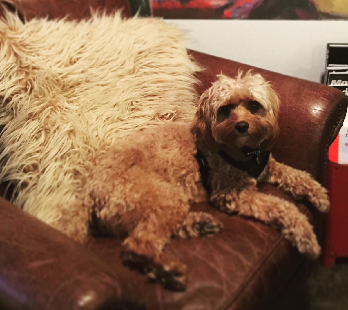 Jamie the Studio Dog