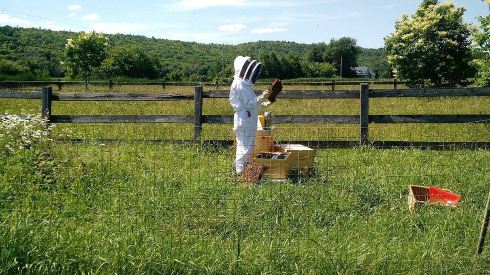 Apiculteur qui cultive du miel