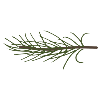 Pine Spruce Branches 9