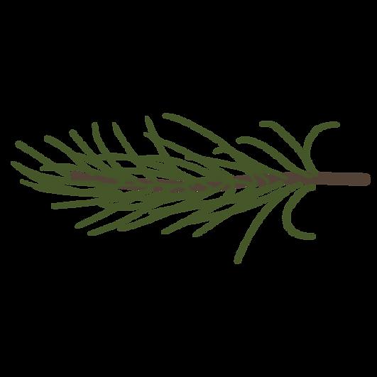 Tall Spruce förgrena 9
